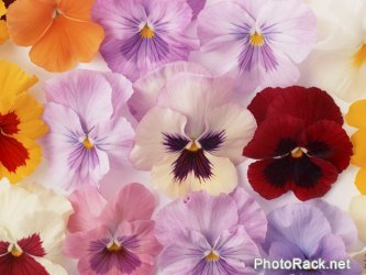 Free Stock Photo by PhotoRack.net   Download Full Quality by clicking the Image
